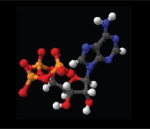 ATP, Cell Proliferation