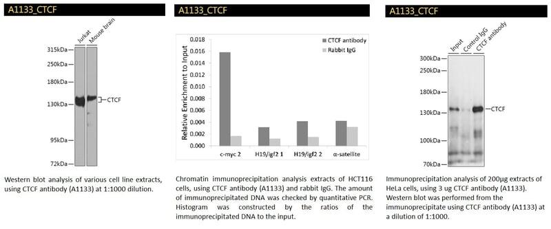 CTCF Polyclonal Antibody