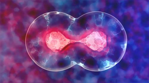 Cell Proliferation