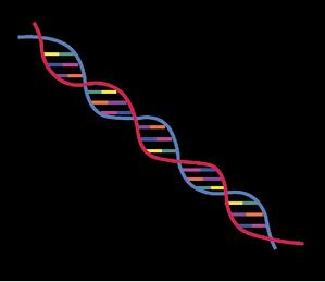 DNA Synthesis-1