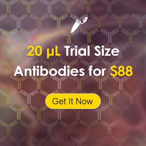 Trial_Size_Antibodies_for_$88.jpg
