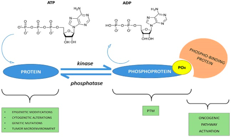 Phospho-signaling networks
