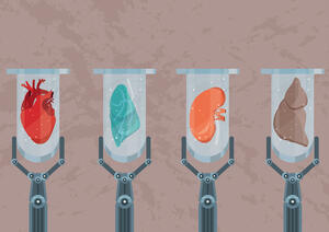 Bio-engineered organs