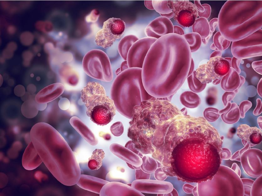 ErbB Antibody-01
